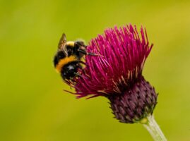 How to Entice Pollinators into Your Garden
