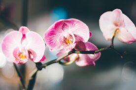 The Best Indoor Plants to Bring the Outdoor Inside