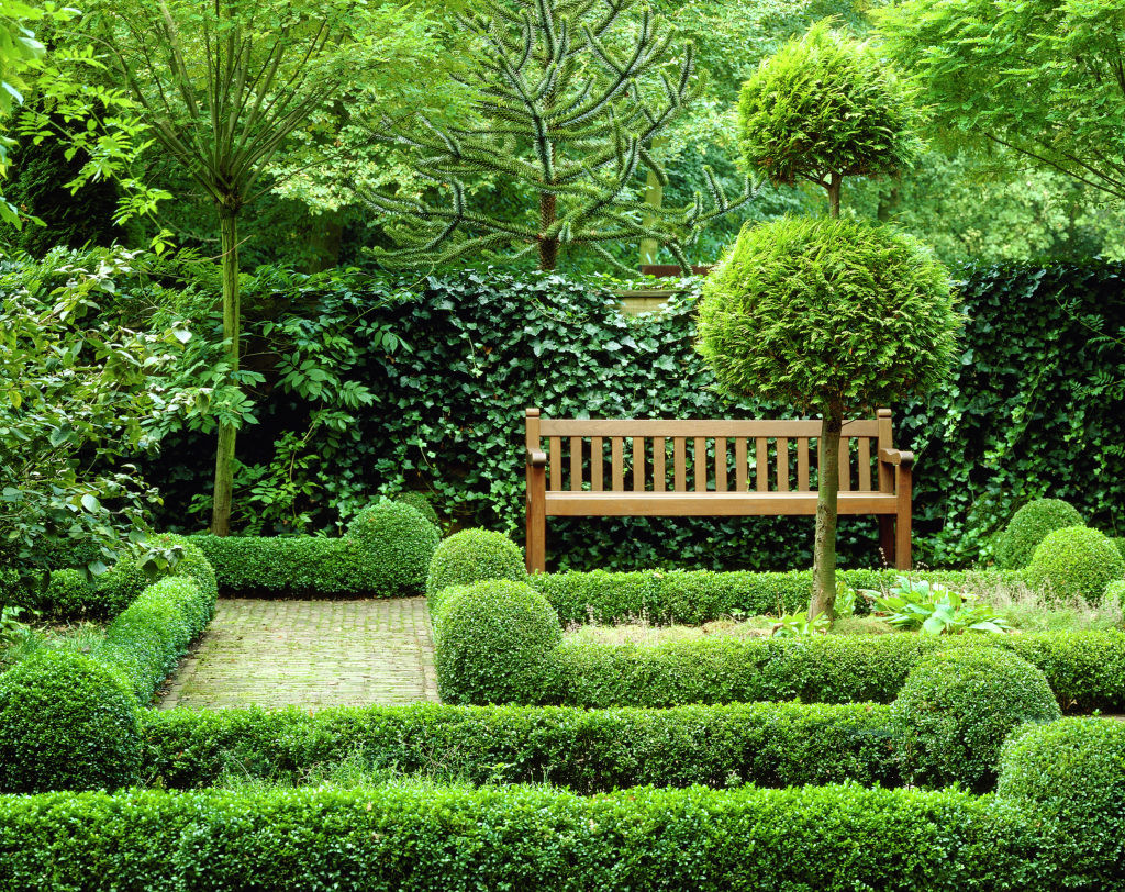 Buxus sempervirens [Box Clipped]